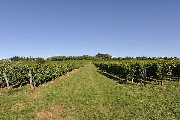 Les Vignes du Domaine de la Feuillarde